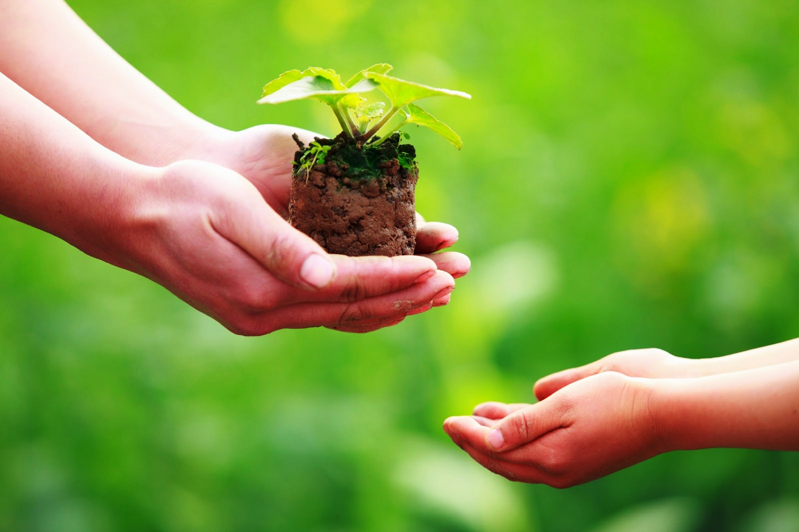 Giving and receiving heal both the giver and the receiver - Image: Hands gifting a small plant to cupped hands receiving it