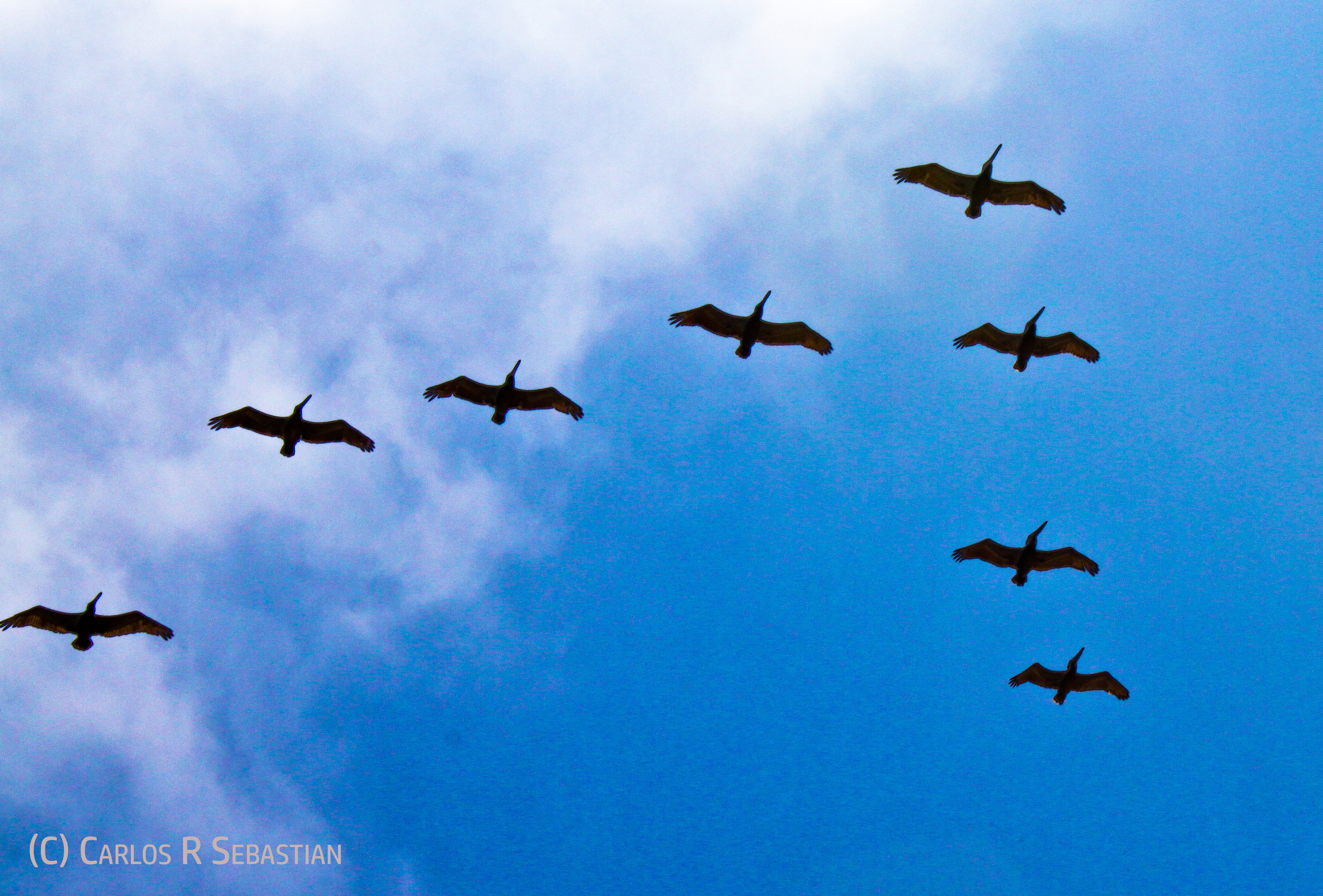 Freeing our souls from negative behaviours and blocked energy is the healthiest route towards happiness - Image: Flying pelicans (copyrighted)