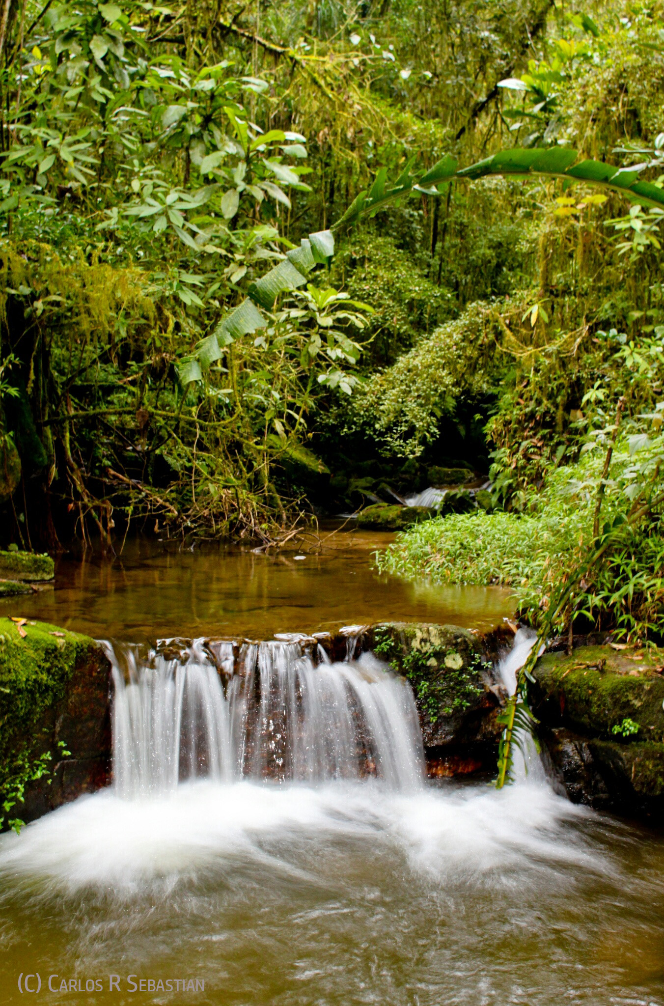 Nature can teach us the important lessons of wholeness and interconnectedness - Image: A forest stream cascades over rocks (copyrighted)